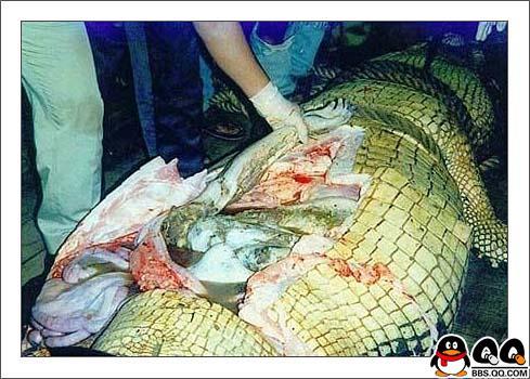 恐怖 可怜少年被残忍大鳄鱼撕碎生吃