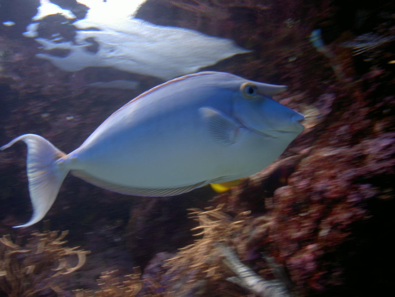 壁纸 动物 海底 海底世界 海洋馆 水族馆 鱼 鱼类 1440_1080