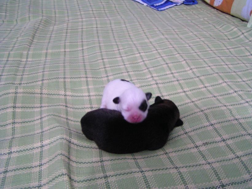 刚出生的小家伙,我觉得像小猪!